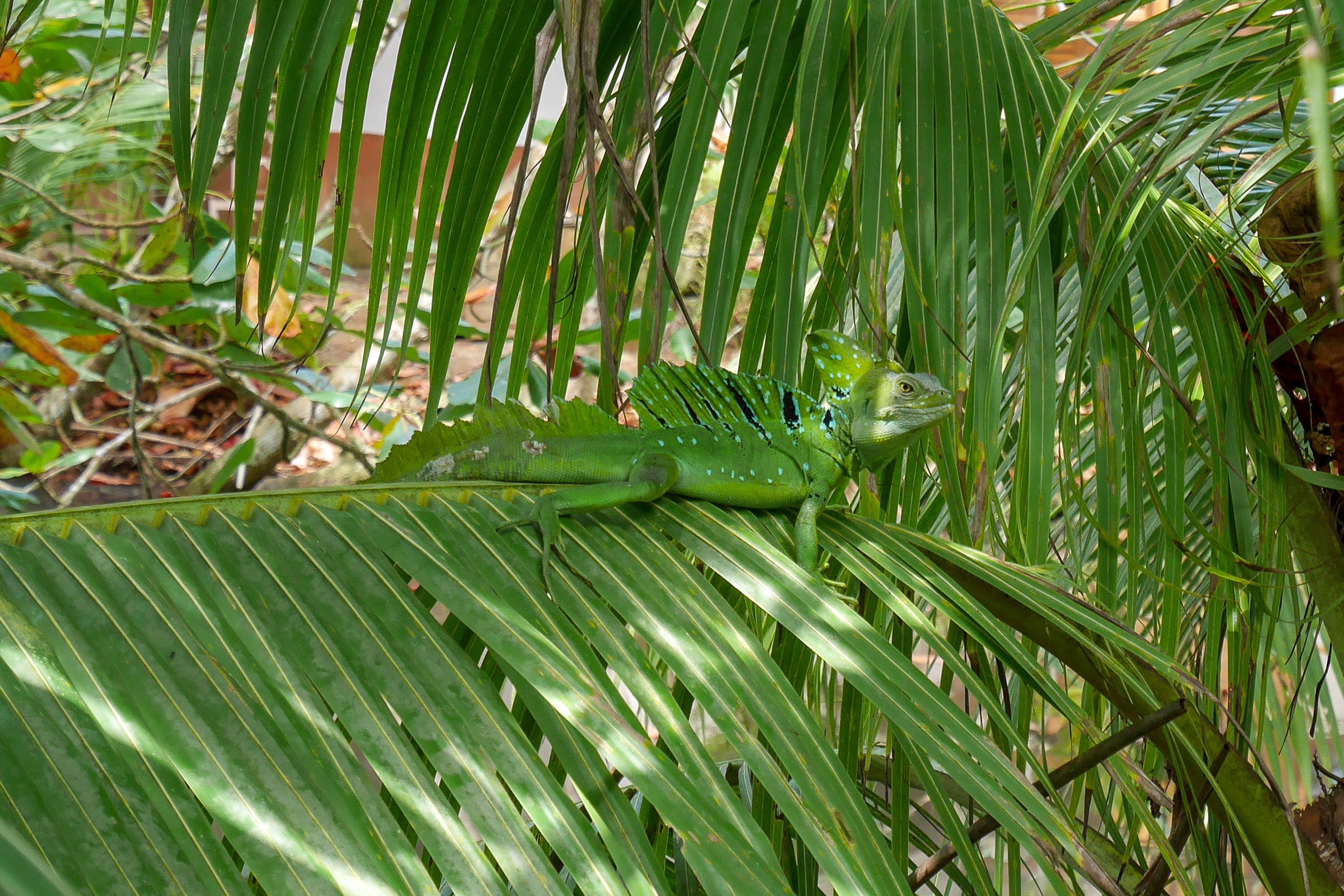 Fifty shades of green: Costa Rica