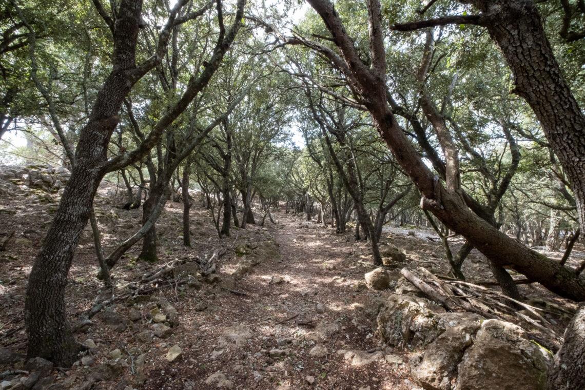 Hiking around Valldemossa