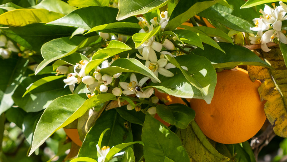 The scent of spring on Mallorca